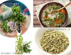 オーガニックシードで作ろう!!料理に使えるハーブ4種セットの画像