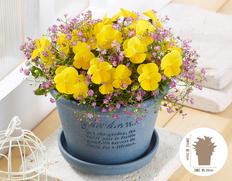 【12月にお届け鉢花】届いた時から春までたくさんの花を咲かせる ビオラ寄せ植えの画像