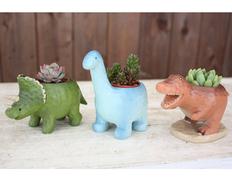 日付指定可!癒しのグリーンを!多肉恐竜3点セットの画像
