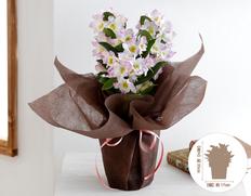 【1月お届け鉢花】上品な色合い デンドロビウム 桃白系の画像